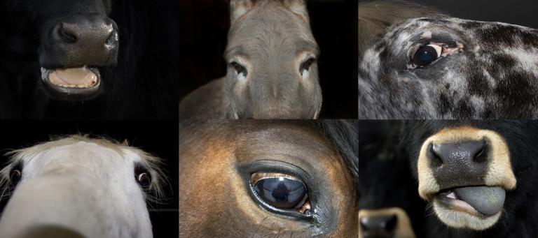 Esko Männikkö horses Deutsch Börse prize photography