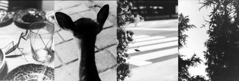 jochen lempert nature animals insects deutch borse prize photography
