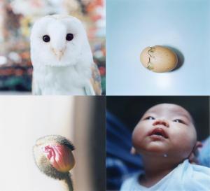 Rinko Kawauchi Aila Japanese photography art
